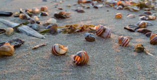 Coquilles dans le sable Image stock