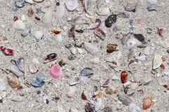 Coquilles dans le sable de la plage tropicale de paradis photos libres de droits