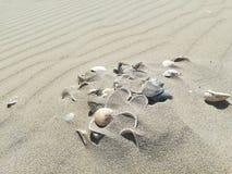 Coquilles dans le sable sur la plage Image libre de droits