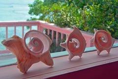 Coquilles de conque sur le rebord de fenêtre, les Turcs et la Caïques Images stock