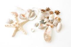 Coquilles de coque et étoiles de mer Image libre de droits