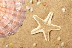 Coquilles de coque et un mensonge d'étoiles de mer sur le littoral Photo libre de droits