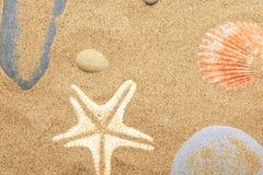 Coquilles de coque et un mensonge d'étoiles de mer sur le littoral Image stock