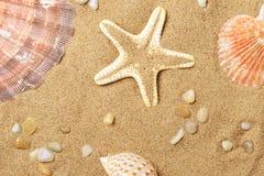 Coquilles de coque et un mensonge d'étoiles de mer sur le littoral Photos stock