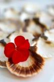 Coquilles de coque et une fleur Photos stock