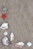 Coquilles de coque marines Image stock