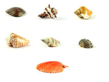 Coquilles de coque multicolores de mer Photo stock