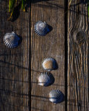 Coquilles de feston sur le bois superficiel par les agents Photos stock