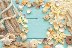 Coquilles de mer Photos libres de droits