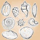 Coquilles de mer illustration libre de droits