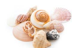 Coquilles de mer Image libre de droits