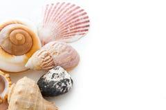 Coquilles de mer Image stock