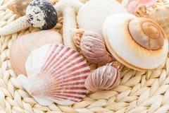 Coquilles de mer Photo libre de droits