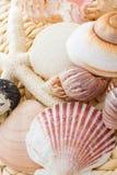 Coquilles de mer Photographie stock libre de droits