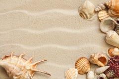 Coquilles de mer avec le sable comme fond photographie stock