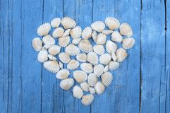 Coquilles de mer blanche formant un coeur photo stock