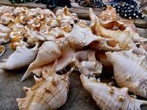 Coquilles de mer dans des poses abstraites images libres de droits