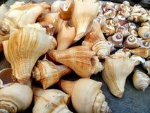 Coquilles de mer dans des poses abstraites photos stock