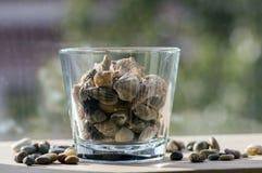 Coquilles de mer dans le bol en verre transparent, décoration intérieure sur la table en bois Photos stock
