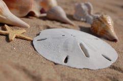 Coquilles de mer de la Floride photos libres de droits