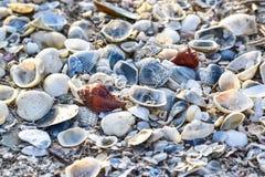 Coquilles de mer du côté de mer Photographie stock libre de droits