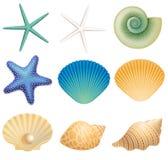 Coquilles de mer et étoile de mer Photos stock