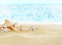 Coquilles de mer sur la plage photos libres de droits