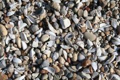 Coquilles de mer sur la plage photos stock