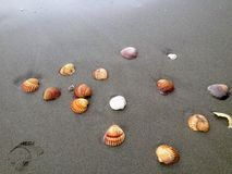 Coquilles de mer sur la plage image stock