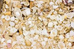 Coquilles de mer sur la plage sablonneuse, Koh Lanta, Krabi, Thaïlande photographie stock libre de droits