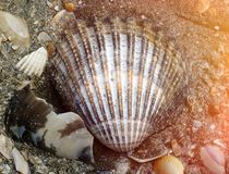 Coquilles de mer sur le bord de mer images libres de droits