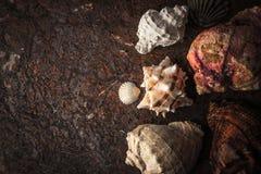 Coquilles de mer sur le fond en pierre foncé Images stock