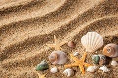 Coquilles de mer sur le sable photos stock