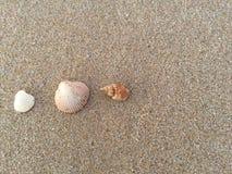 Coquilles de mer sur le sable brun Seashell de feston sur le rose photos libres de droits