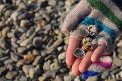 Coquilles de mer sur le woman& x27 ; main de s photo stock