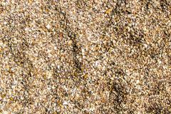 Coquilles de mollusque de palourde images stock
