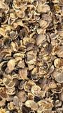coquilles de noix Photographie stock libre de droits