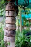 Coquilles de noix de coco Photos libres de droits