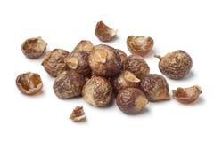Coquilles de noix des soapnuts Image stock