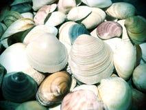 Coquilles de plage Photographie stock