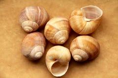 Coquilles des escargots de raisin Photographie stock libre de droits