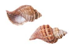 Coquilles des mollusques, ressac jeté approximatif vide Images libres de droits