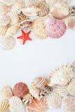 Coquilles et étoiles de mer sur le blanc Image stock