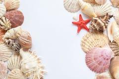Coquilles et étoiles de mer sur le livre blanc Images libres de droits
