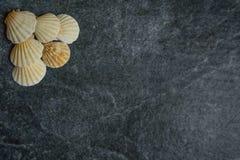 Coquilles et étoiles de mer sur un fond froid en pierre Photos libres de droits
