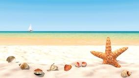 Coquilles et étoiles de mer sur une plage sablonneuse avec les ressacs calmes Longueur 4k sans couture clips vidéos