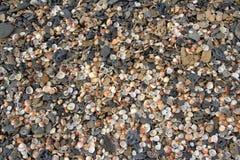 Coquilles et cailloux sur une plage Images stock
