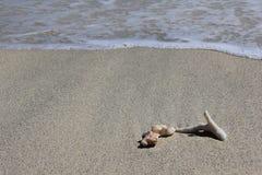 Coquilles et coraux sur la plage blanche arénacée de Gili Trawangan Image libre de droits