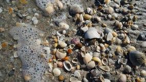 Coquilles et océan Images stock