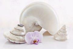 Coquilles et orchidls Photos stock